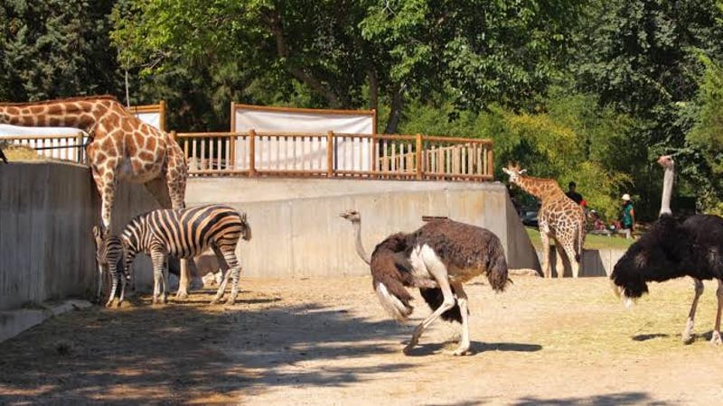 If you love the idea of visiting a zoo, Kumasi Zoological Gardens is an ideal spot for you. It's one of the top 10 places to visit in Ghana