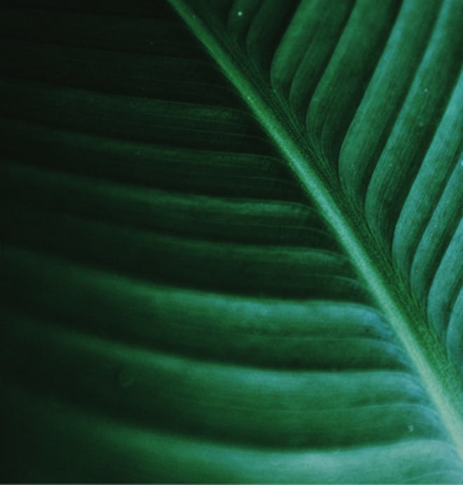 Close-up of a leaf structure: nature's engineering supplied the inspiration for organic redox flow batteries.