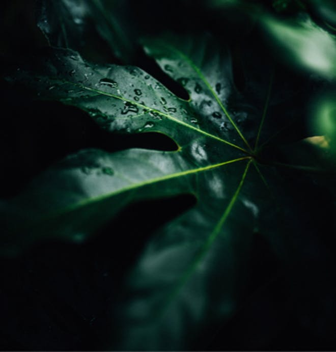 Water droplets on a green leaf, where redox processes also occur in plant cells.