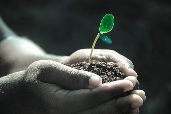 man die een plantje vast houdt en laat groeien, metafoor voor een werknemers laten groeien in het bedrijf