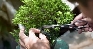 Photo de l'événement Tout savoir sur le bonsaï !