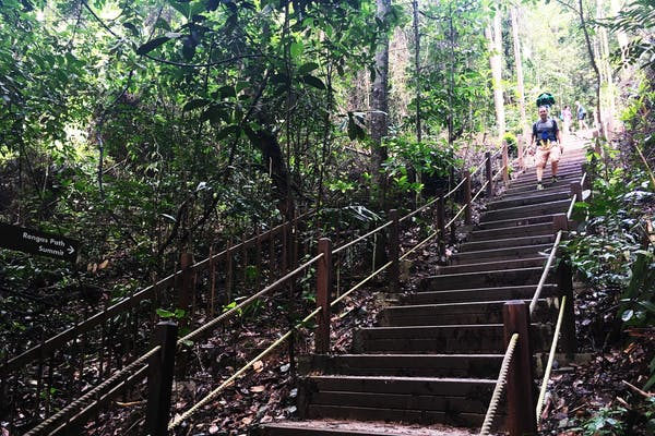 staircase leading to jungle