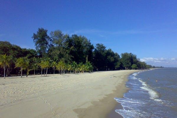 sandy beach and coconut trees