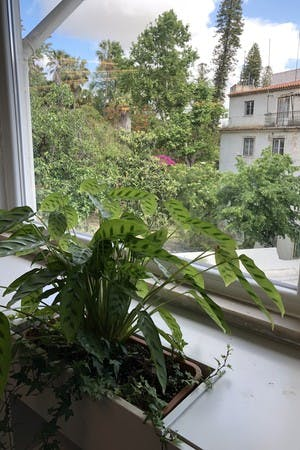 Cowork Central Príncipe Real has a lovely view over the botanical garden with plants inside and out