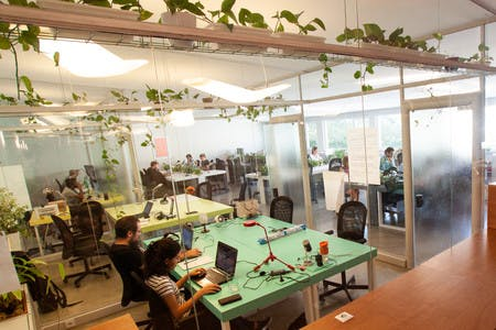 Our coworking space at Principe Real is full of plants and natural light