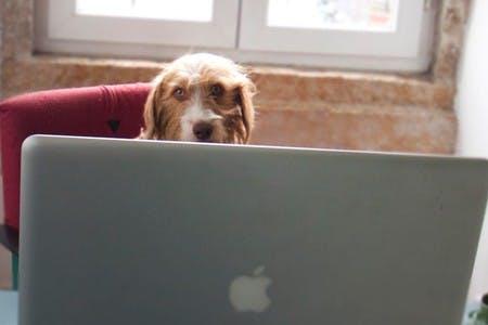 Somos o mais antigo pet-friendly cowork em Lisboa. Adoramos cães desde que os seus donos se portem bem :)