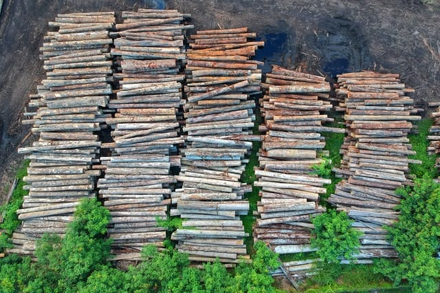 Why addressing forest degradation is at the heart of combating climate change and biodiversity loss