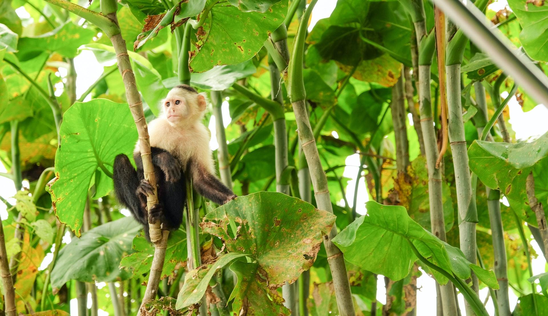 Regnskog i Panama © Paulina Sanchez, Getty Images