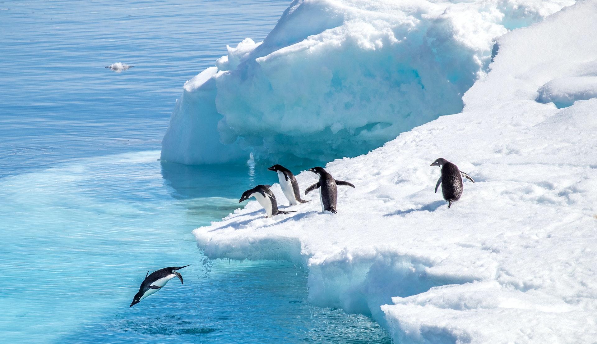 Pingviner i Antarktis © Tiago Rodriguez, Getty Images