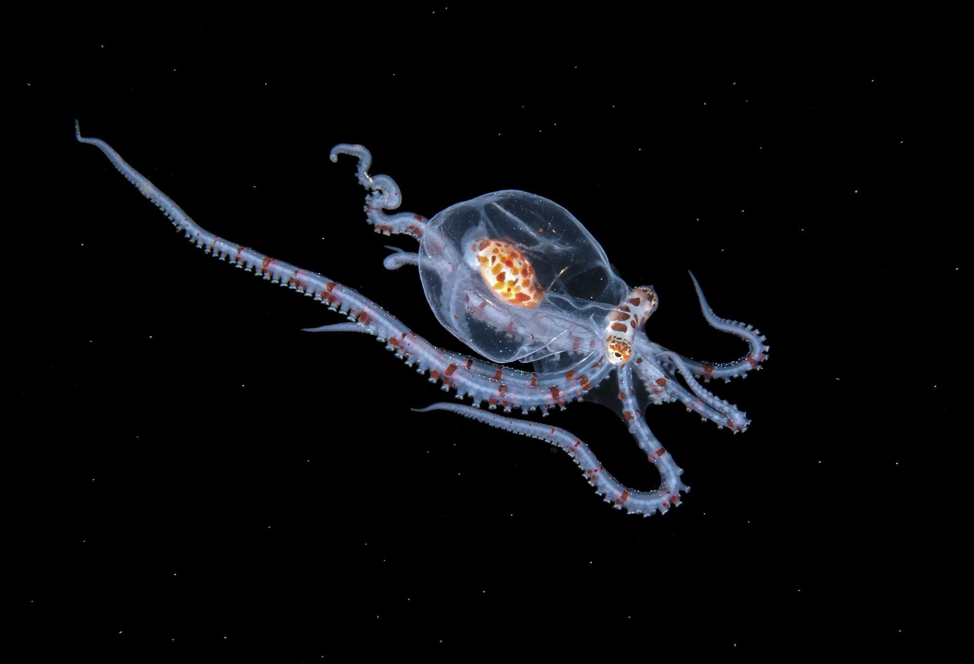 Steven Kovacs: Atlantic Ocean's Stunning Diversity