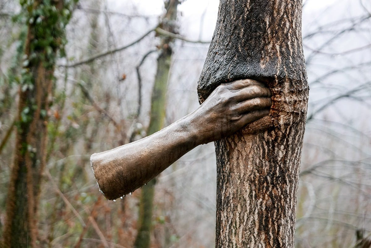 GIUSEPPE PENONE: THE BRONZE IN THE MATRIX OF A TREE