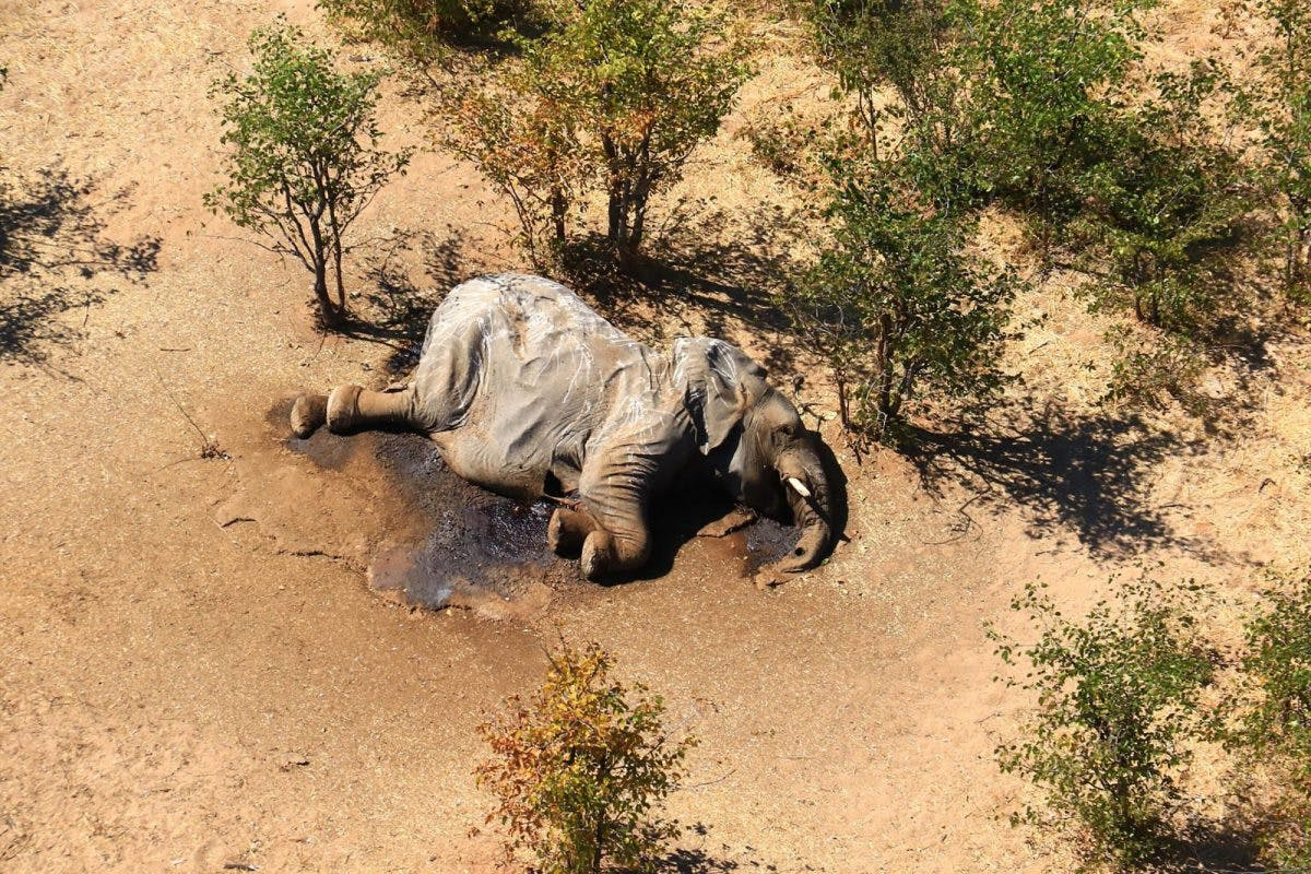 AT LEAST 350 ELEPHANTS FOUND DEAD IN BOTSWANA