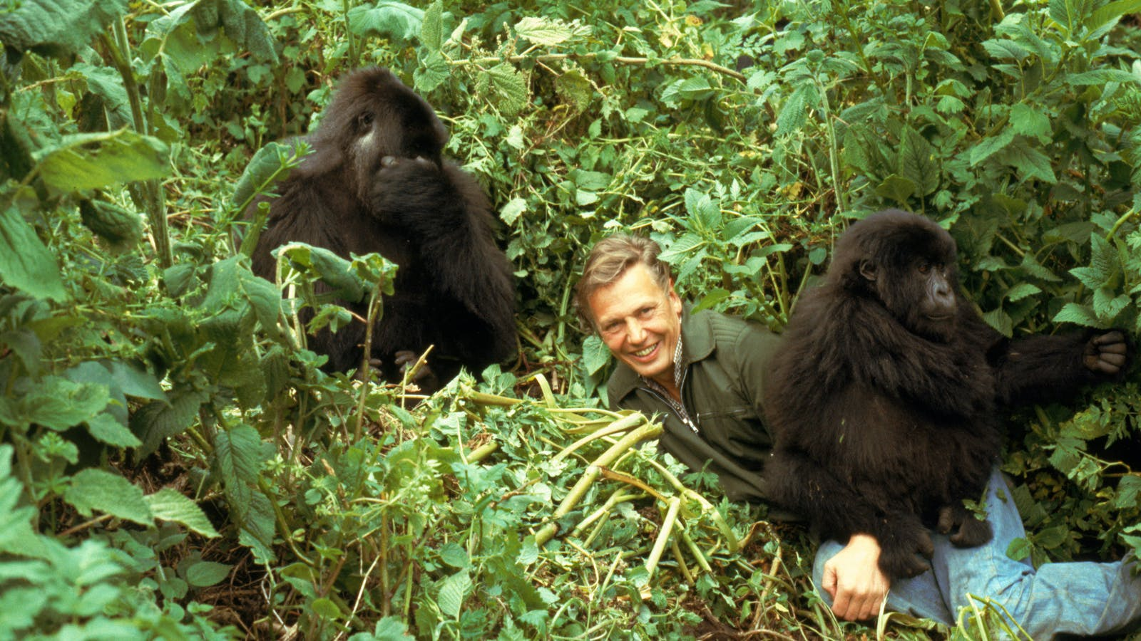 Is anyone a natural to replace Attenborough?