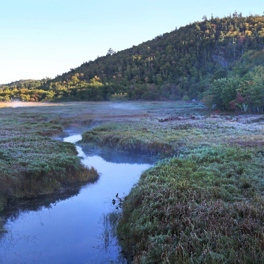 Floodplain and stream near the Musquodoboit River in Nova Scotia