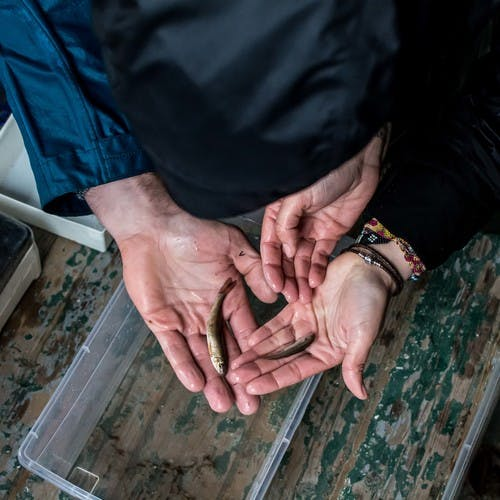 Small Fish in Hands - Celebrating Citizen Science Day 2019 Background Image