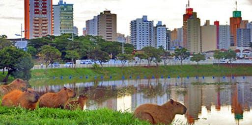 Goiânia para São José do Rio Preto