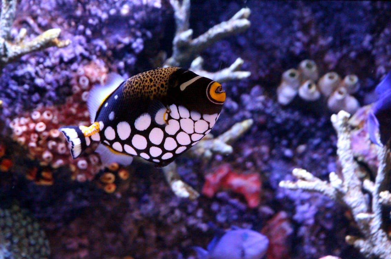 Photo La grande barrière de corail - Australie