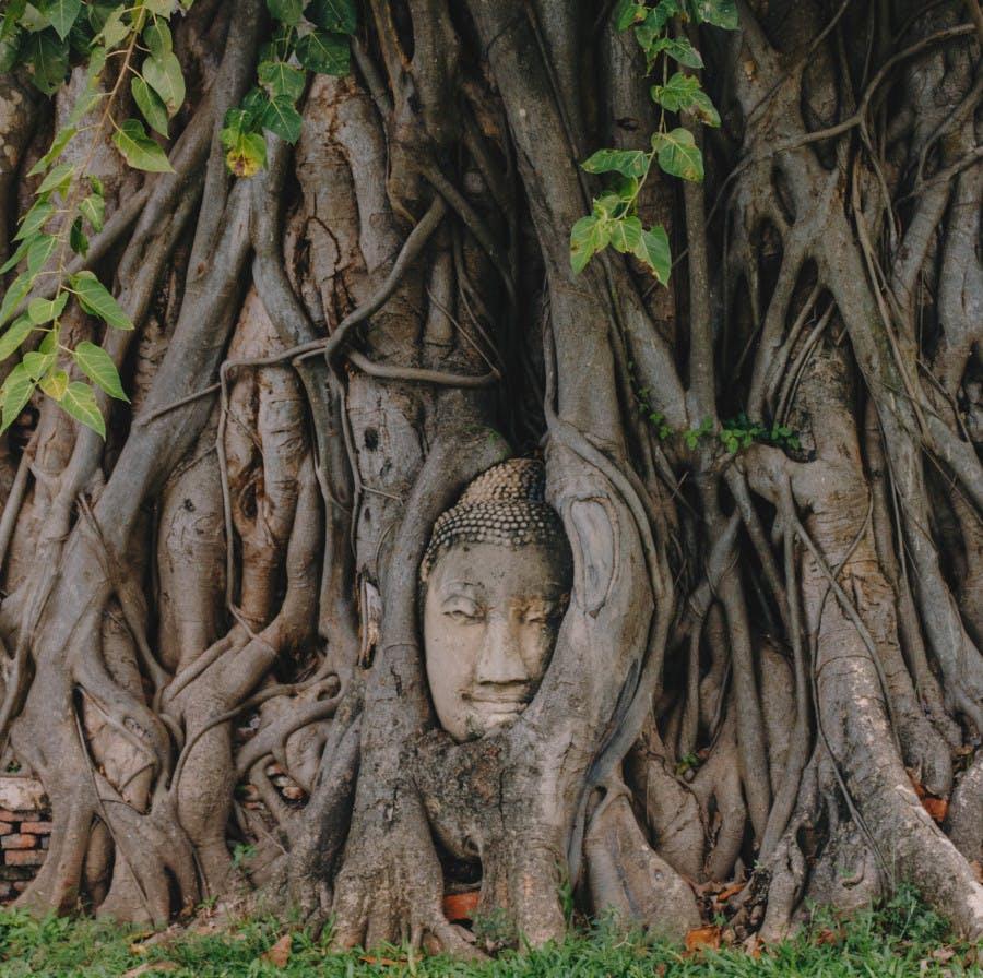 Photo Les ruines d'Ayutthaya - Thaïlande