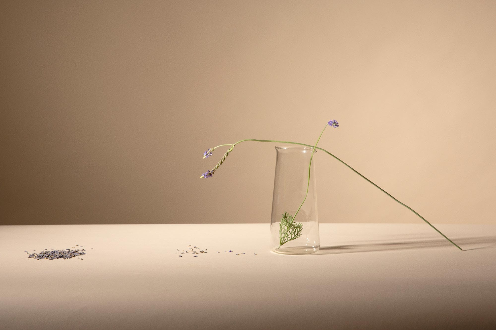 A stalk of lavendar sitting on a beaker
