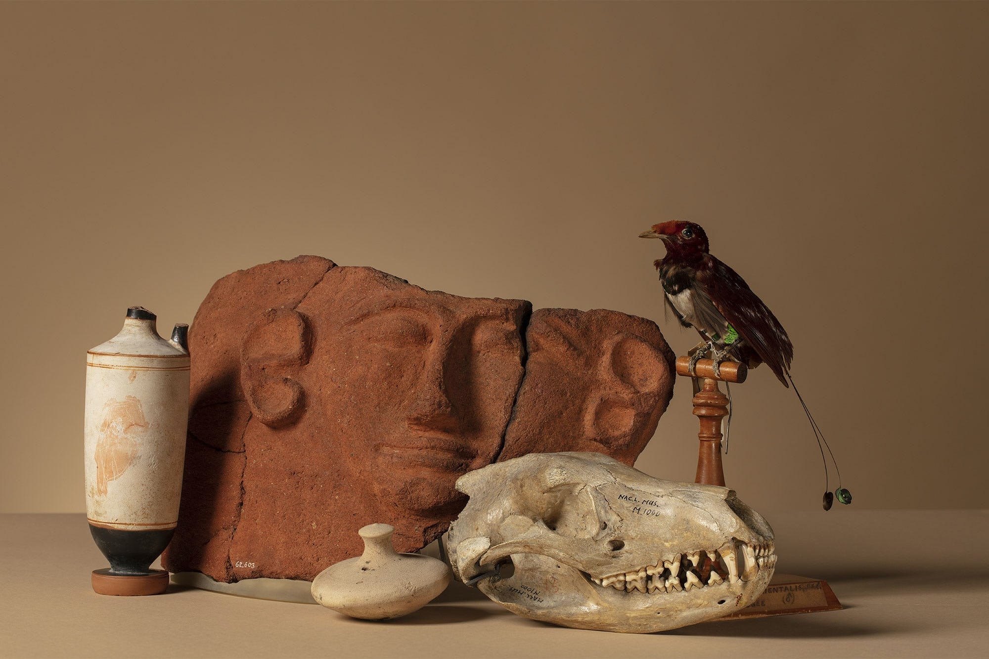 Still life of Museum artifacts