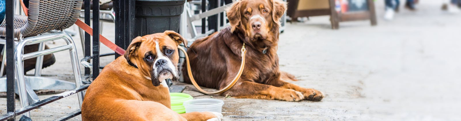 two dogs sitting outside a restaurant