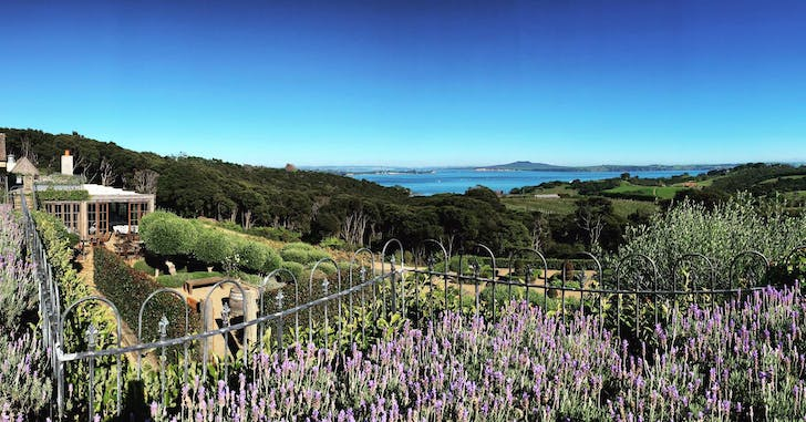 Mudbrick Vineyard overlooking the Hauraki Gulf