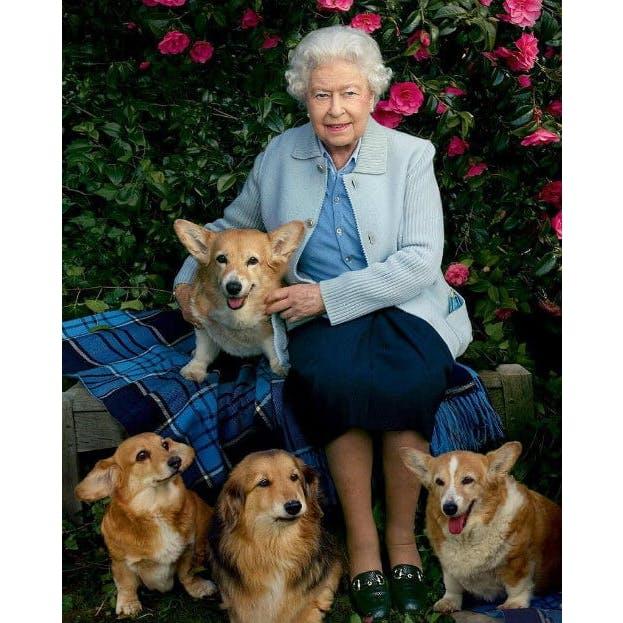 Королева Елизавета II и ее питомцы вельш-корги пемброк