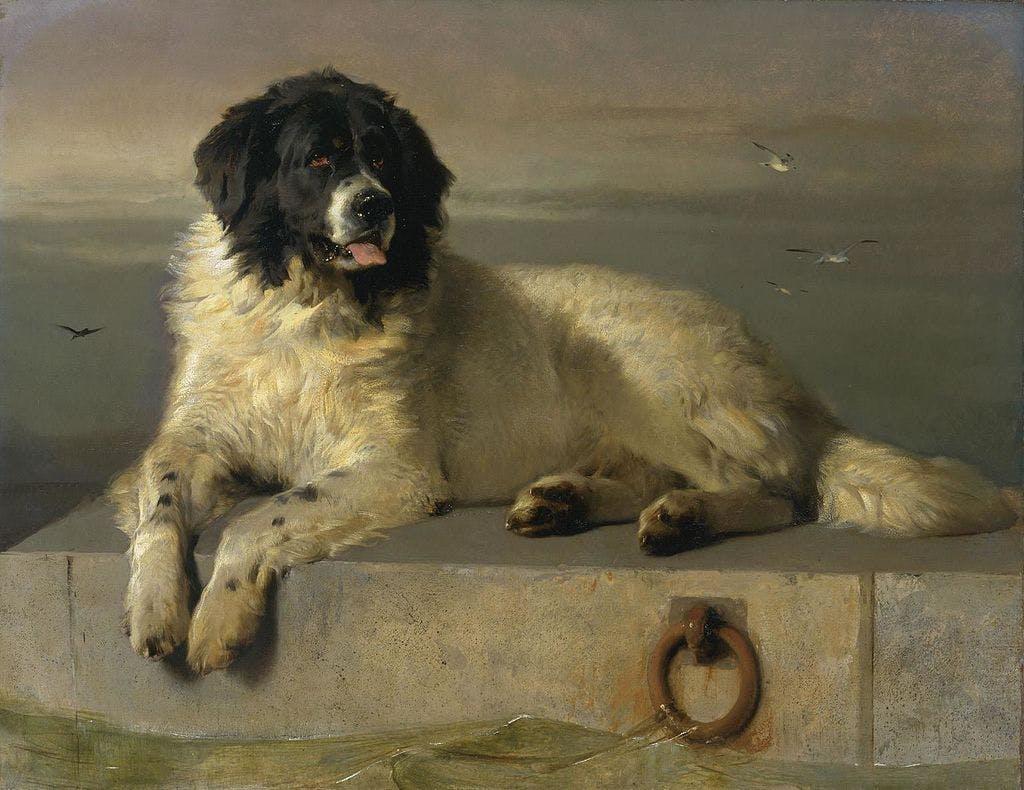 собака-герой Ландсир в одиночку, без сторонней помощи спасла более 20 человек