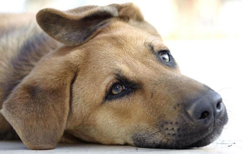 заболевание собак