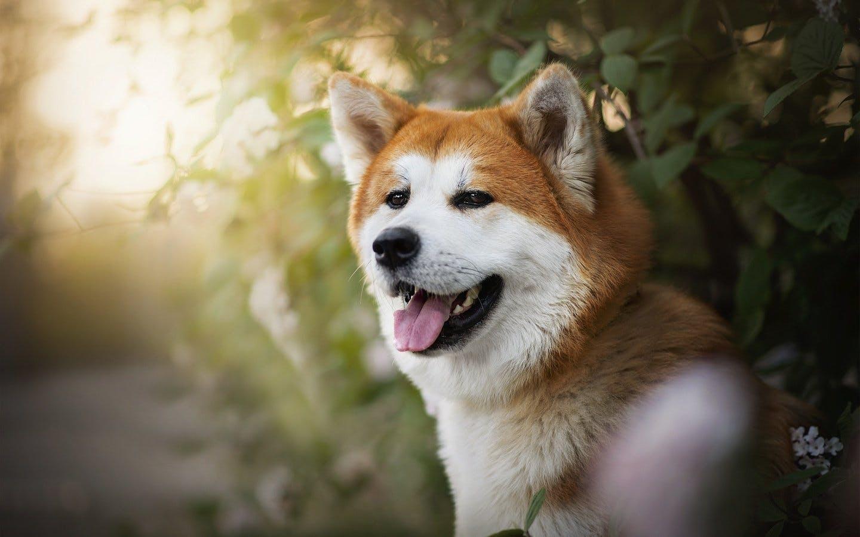 Собачницы, помогите выбрать породу собаки - BabyPlan