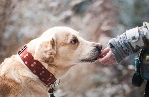 Вазелиновое масло для собак