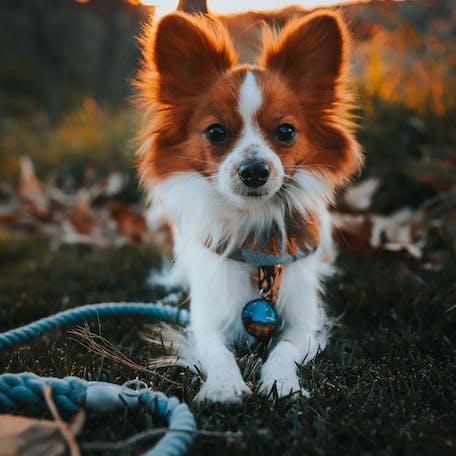 собака фален