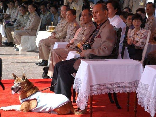басенджи и король Таиланда Пхумилон Алульядет