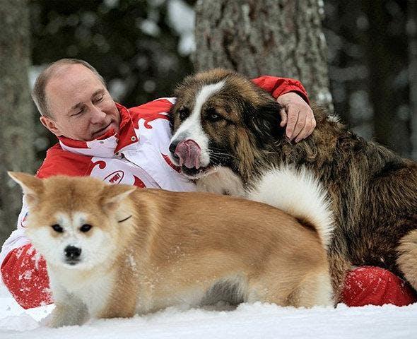 президент В.В. Путин с собакой акита-ину