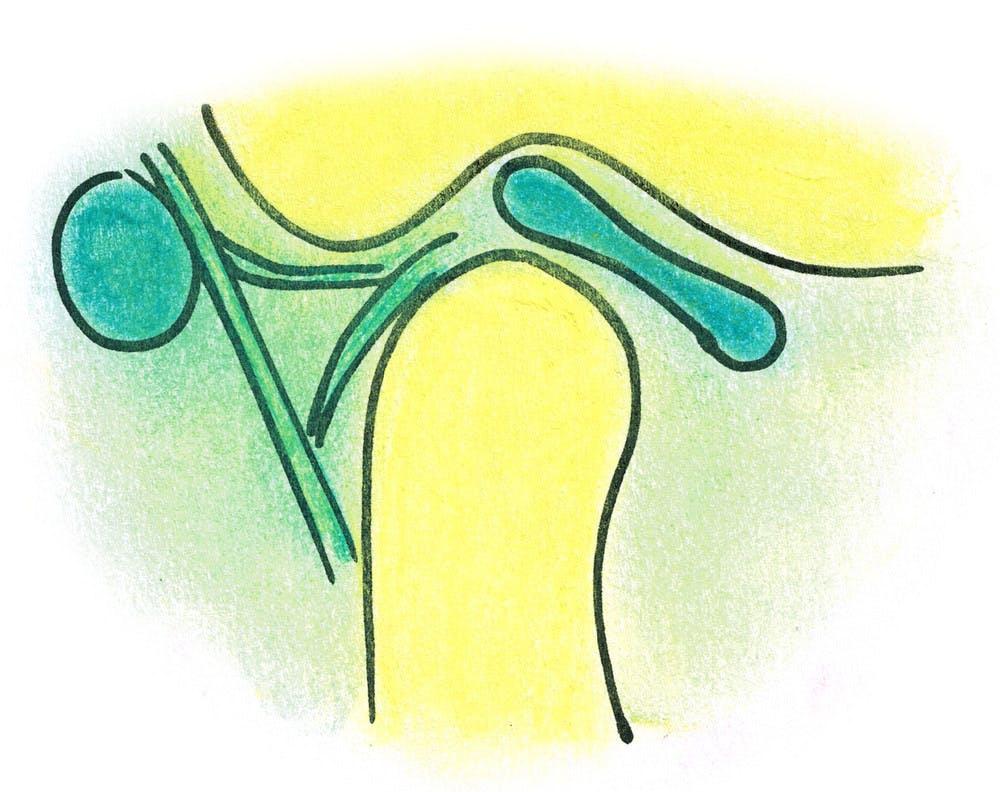 Kiefergelenk und Kiefermuskulatur