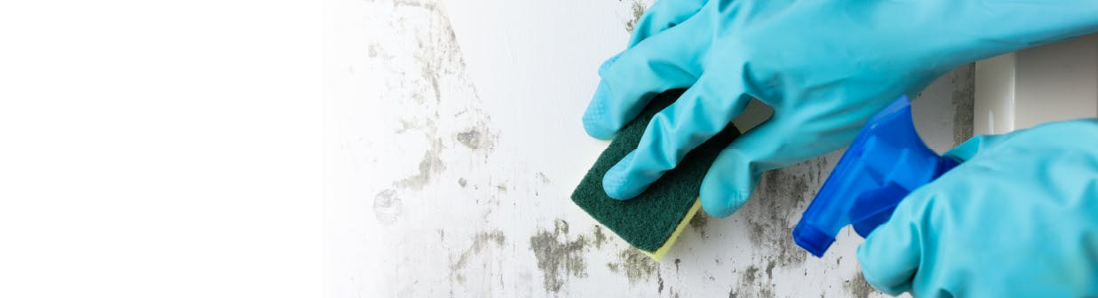 How to clean the wall after removing the wallpaper