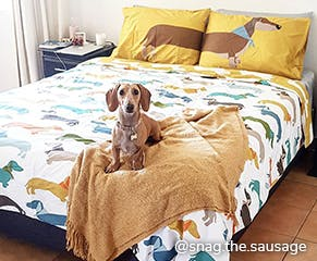 Sausage Dog Duvet Set