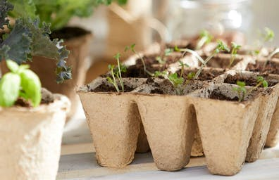 "FROM ""GARDEN"" TO TABLE: GROW YOUR OWN"