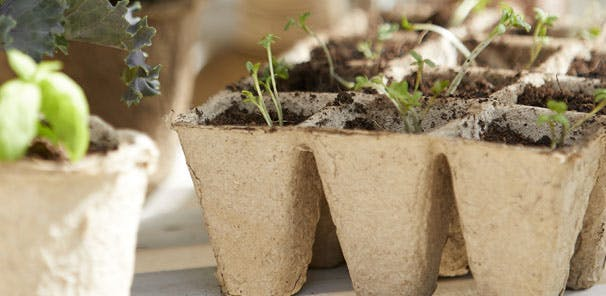 From Garden to Table: Grow Your Own