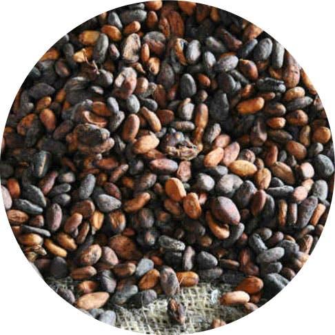 Criollo, Forastero e Trinitario: cosa cambia tra le varietà di cacao?