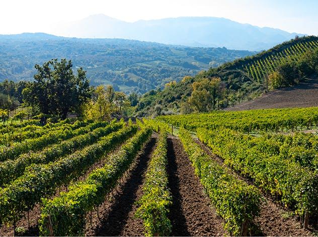 Chianti classico e Montalcino | Eataly