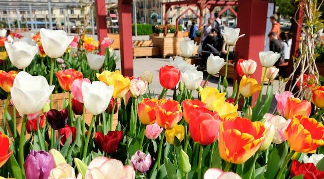 Eataly tulipani