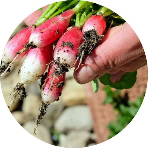Come fare un orto perfetto a casa