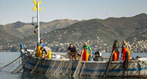 Tecniche di pesca sostenibili: quali sono?