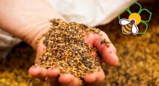 Bee the Future - 100 ettari per il futuro delle api