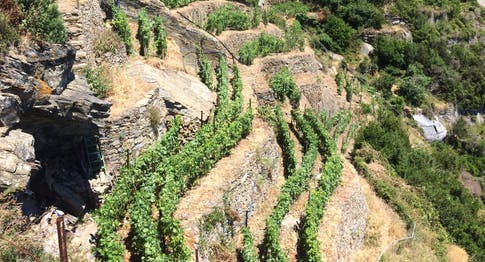 Alla scoperta dei vini eroici