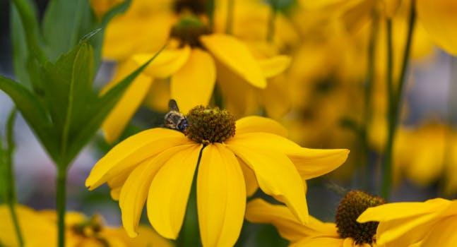 Bee the Future - Eataly