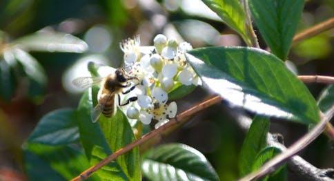 Bee the Future - Ape sul fiore