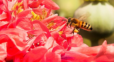 Bee the future