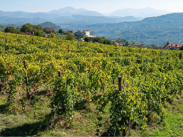 La verde Irpinia e la provincia di Avellino | Eataly